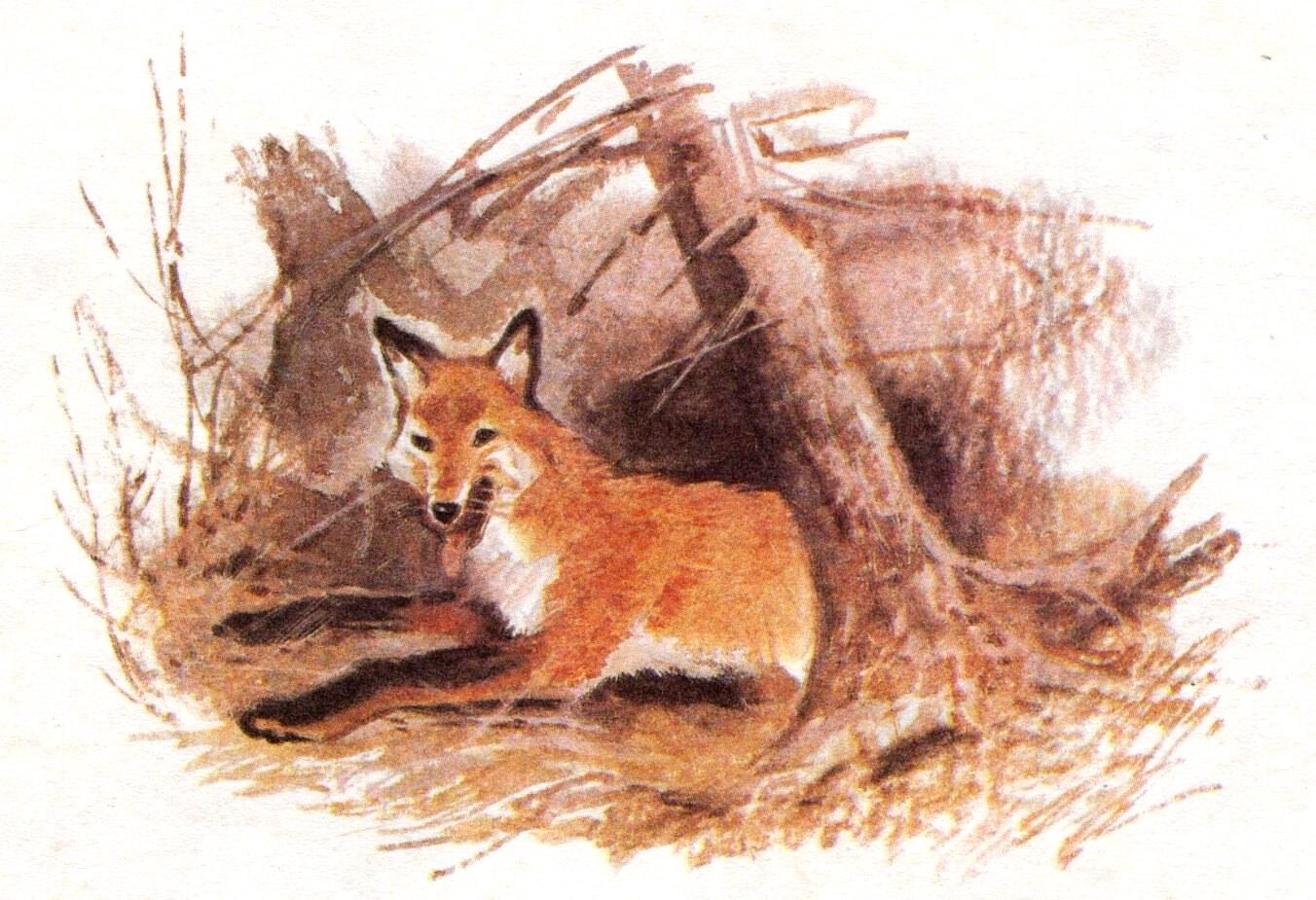 рисунок лисы с лисятами в норе помощью можете