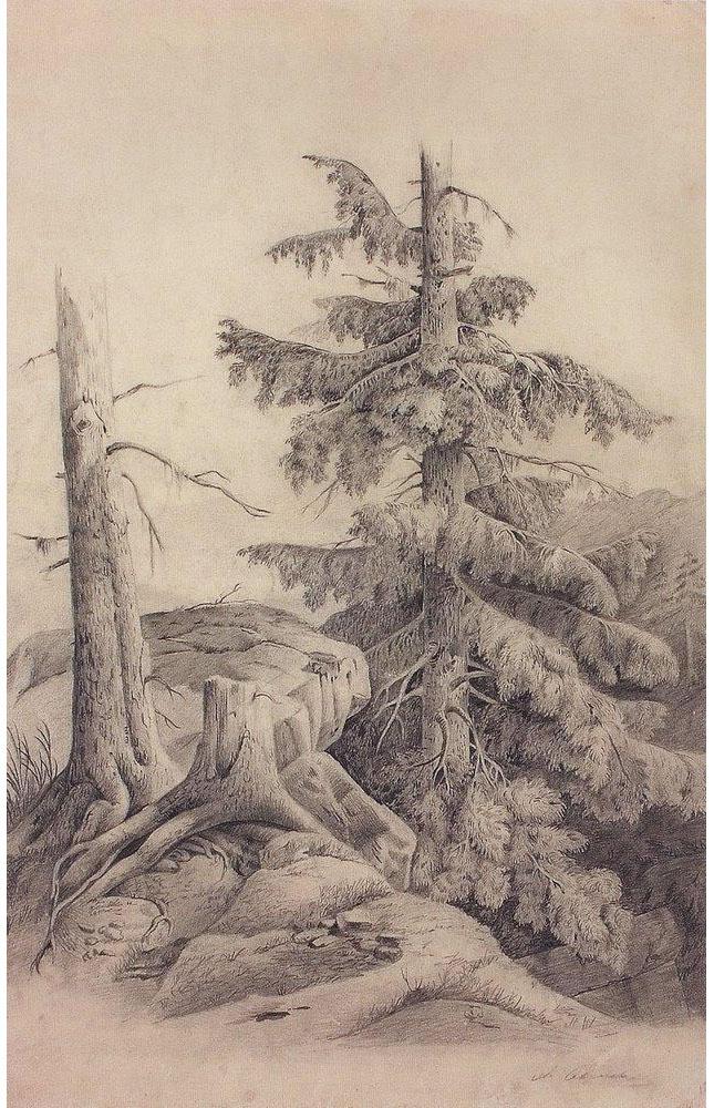 Алексей Саврасов. Ель. 1850-е.
