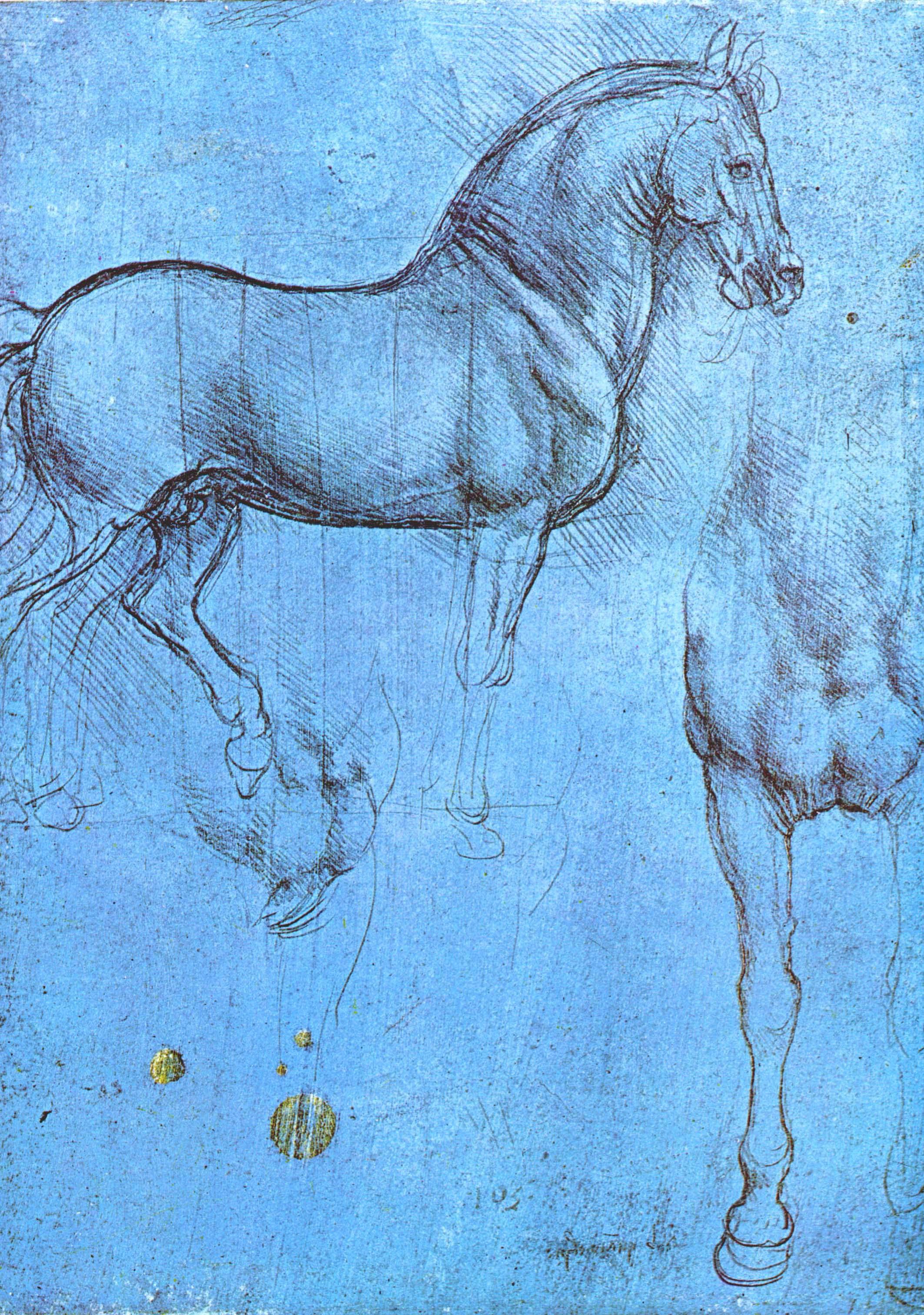 """Леонардо да Винчи. Конь, грудь коня. Набросок к """"Коню""""."""