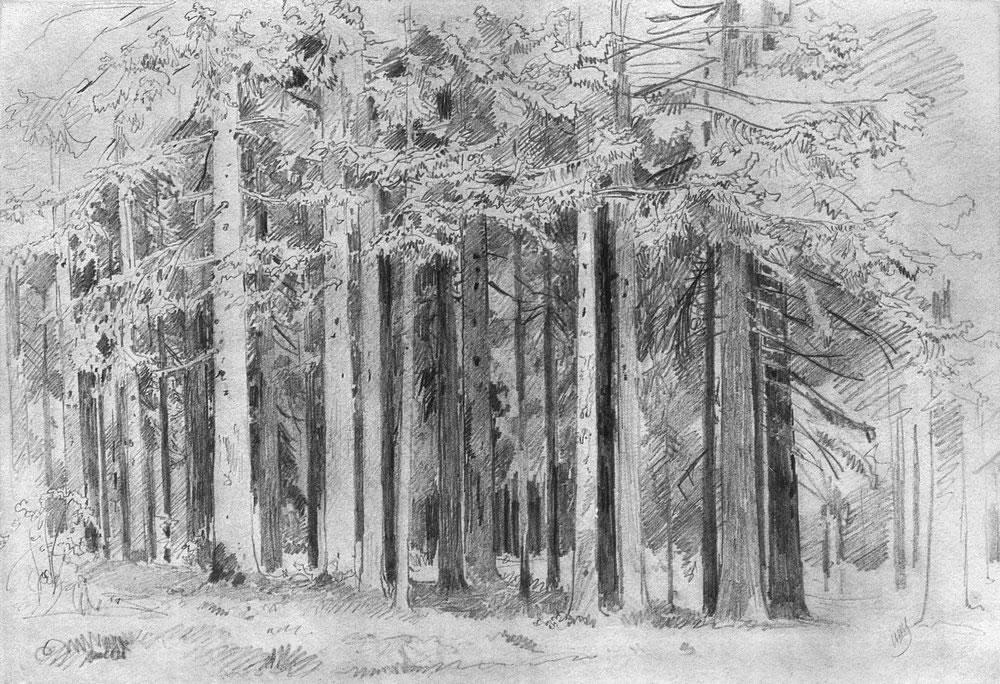 в сосновом лесу рисунок балансы, отчёты это