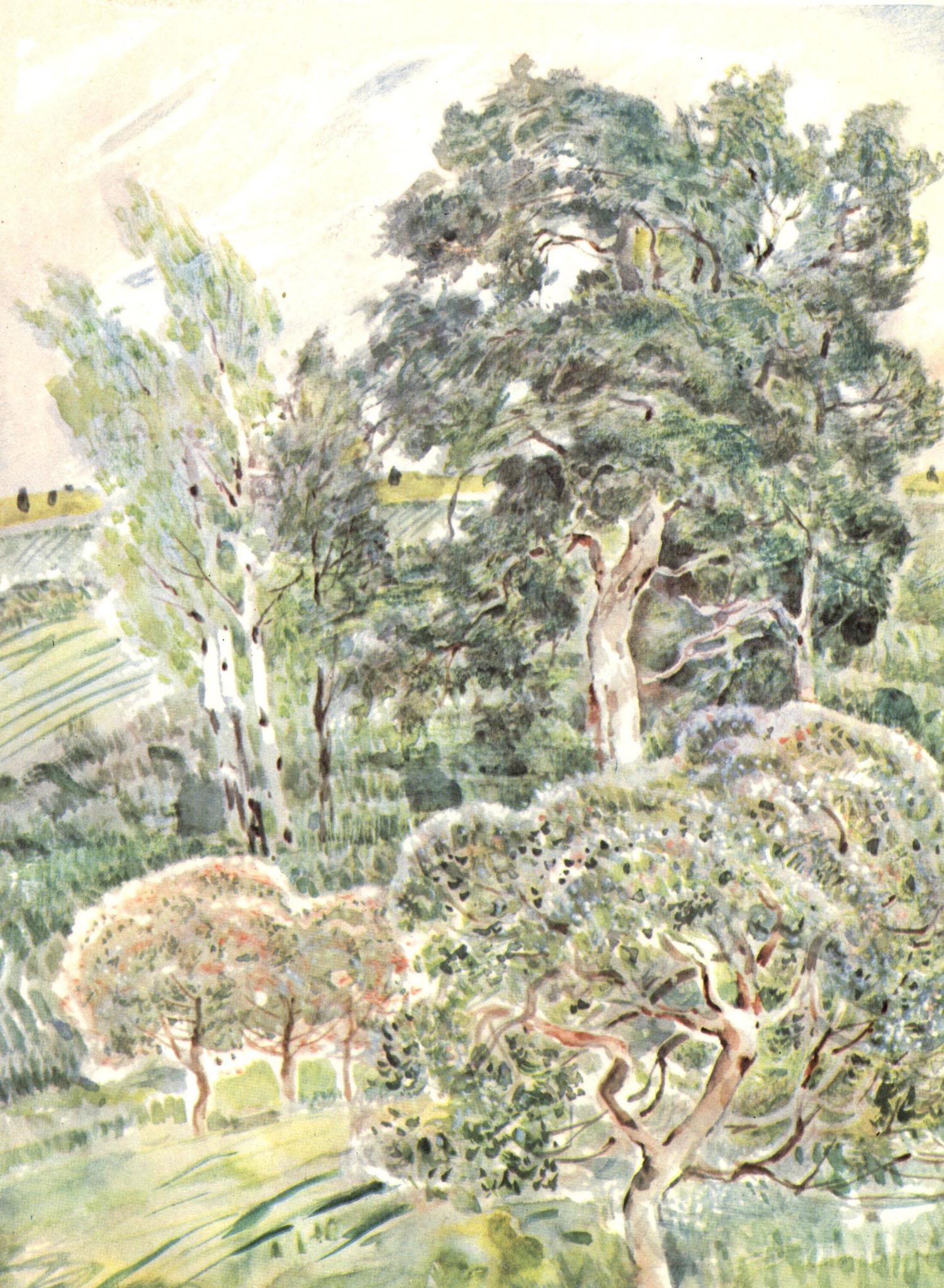 Картинки к стиху зеленый шум