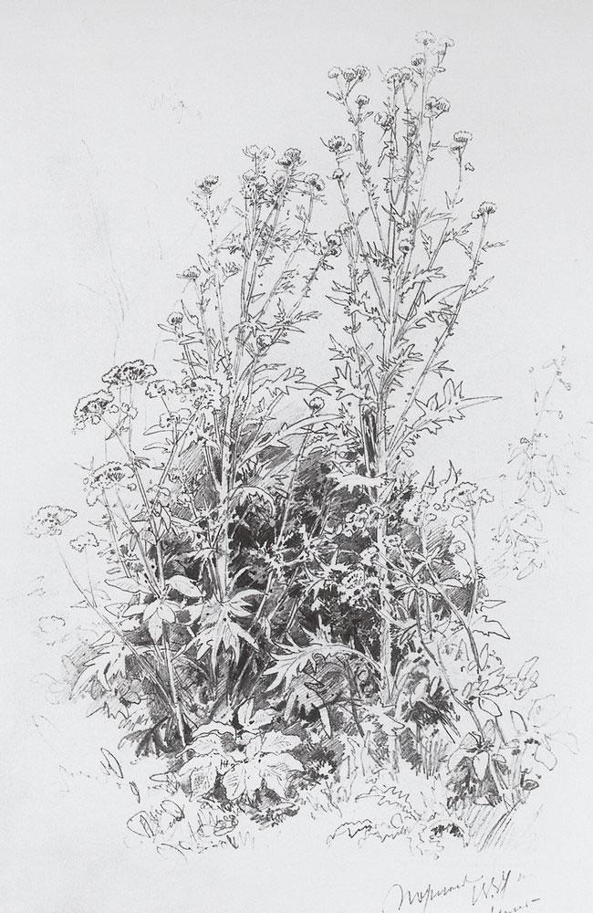 Иван шишкин полевые цветы 1884