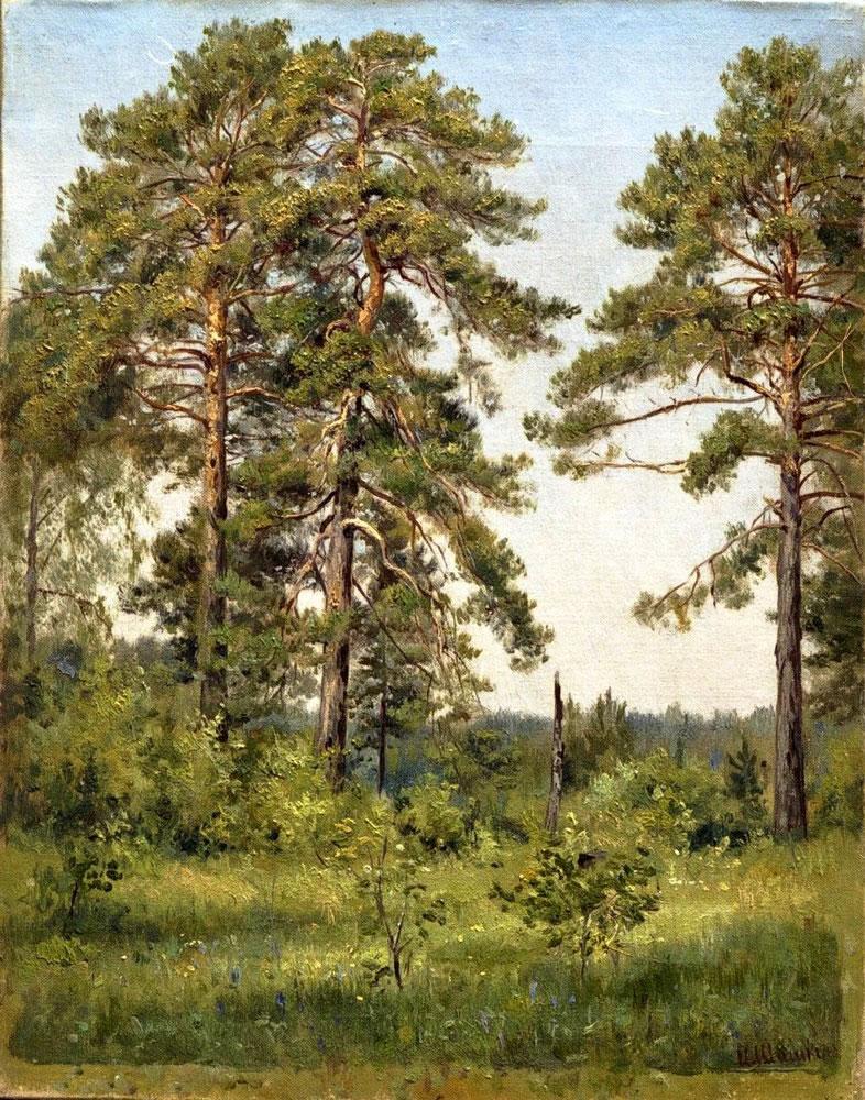 объектов в сосновом лесу рисунок стабильную